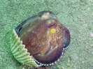 Sulawesi_27