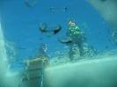 Eistauchen 2007_19