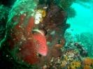 Manado Nord Sulawesi_2